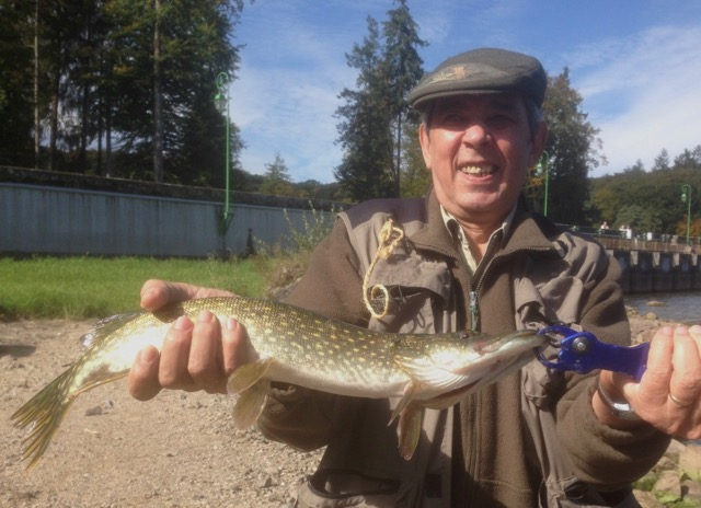 Raymond brochet 50 cm spinner bait