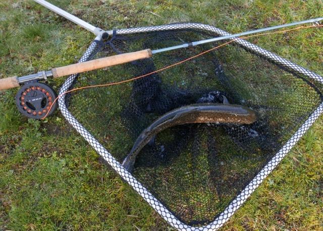 Truite arc en ciel 45 cm canne canne deux mains HOH Overseas Trout Spey 11'3 # 3 streamer